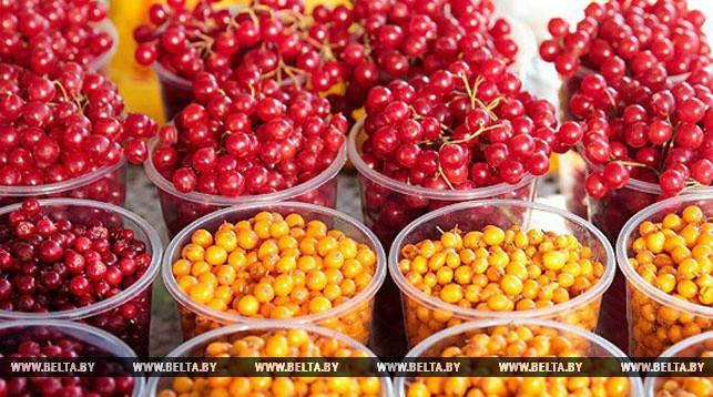 Полесский университет, предприниматели, Беларусь, Украина, выращивание ягод