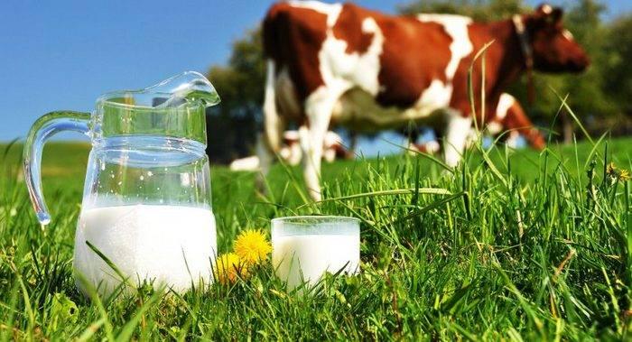 Топ-10 районов Беларуси по надоям молока в первом полугодии 2017 года
