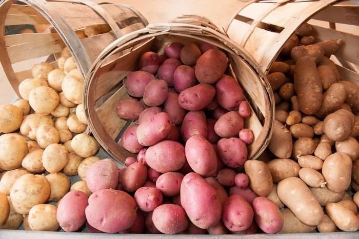 генетический банк, картофель, национальное достояние, Беларусь