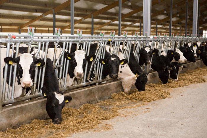 молочно-товарный комплекс, инновации, Беларусь