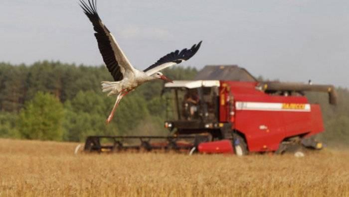 урожай зерновых культур, Беларусь, 2017 год