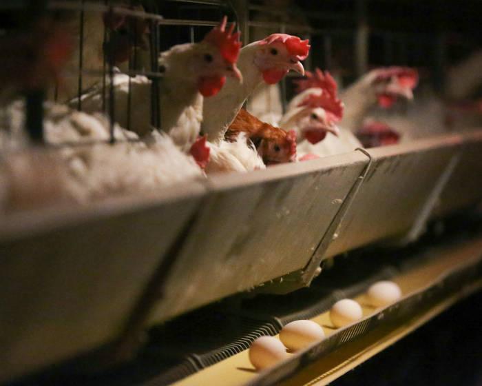 2035 год, потребление яйца в мире, Международный независимый институт аграрной политики, МНИАП