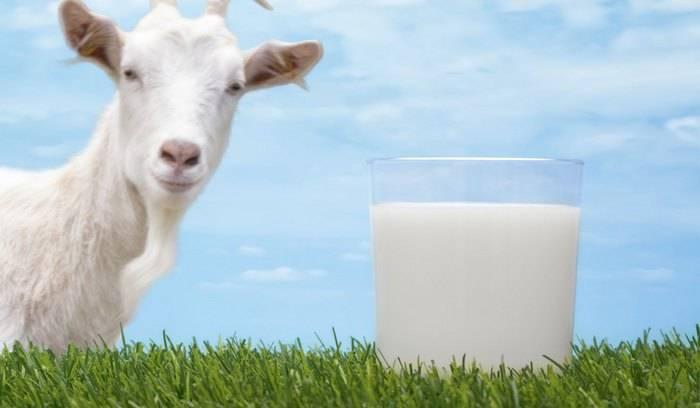 ставропольские ученые, козье молоко, кормление новорожденных