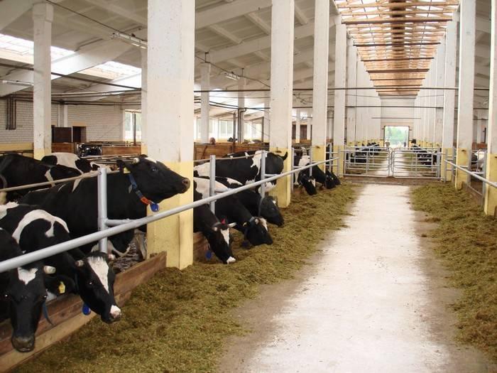 молочно-товарный комплекс