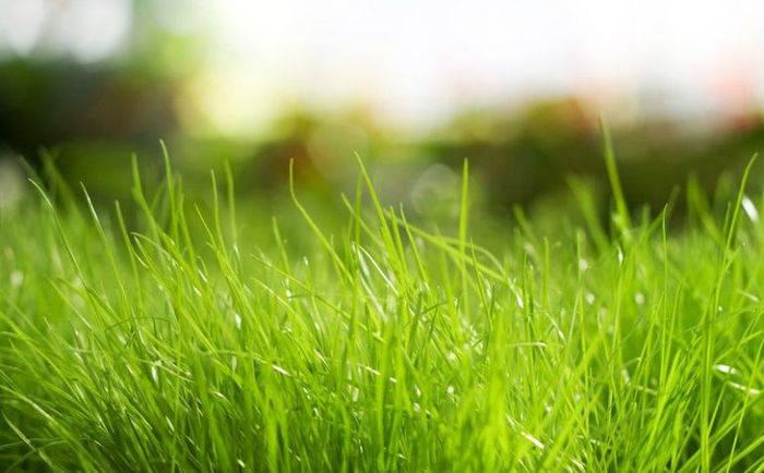 протеин, трава, органические комбикорма, свиньи, птицы