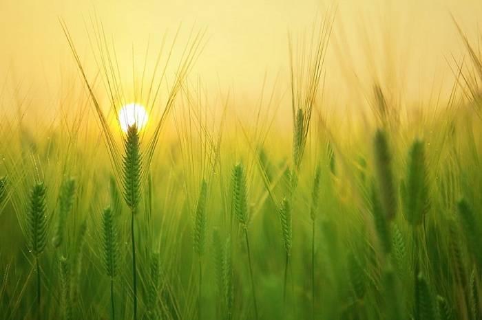 французские ученые, ядохимикаты, увеличение урожая
