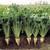 2017 год, урожай, сахарная свекла, Беларусь, 200 000 тонн